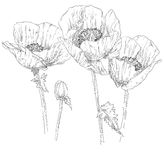 Hand drawing flower Stock Images
