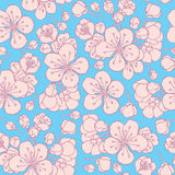 Hand drawing flowering cherry, plum or sakura Royalty Free Stock Photo