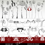 Hand drawing flowers and herbs Stock Image