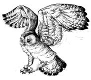 Hand drawing of a flying owl. Stock Photography