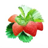 Hand Drawing of  Fresh Ripe Red Strawberries Stock Image