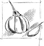 Hand drawing garlic sketch Royalty Free Stock Images
