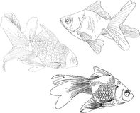 Hand drawing gold fishes Royalty Free Stock Image