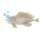 Hand drawing grouper fish side view sea life bubbles Stock Photo