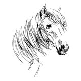 Hand drawing horse head. Vector illustration Royalty Free Stock Photo