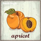 Hand drawing illustration of apricot. Fresh fruit sketch background Stock Photography