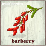 Hand drawing illustration of barberry. Fresh berries sketch background Royalty Free Stock Photography