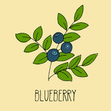 Hand drawing illustration of blueberry Royalty Free Stock Photo