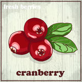 Hand drawing illustration of cranberry. Fresh berries sketch background Stock Photo