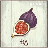 Hand drawing illustration of fig. Fresh fruit sketch background. Vector illustration for your design Stock Images