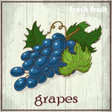 Hand drawing illustration of grapes. Fresh fruit sketch background Stock Photography