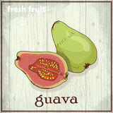 Hand drawing illustration of guava. Fresh fruit sketch background Stock Images