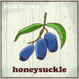 Hand drawing illustration of honeysuckle. Fresh berries sketch background Royalty Free Stock Photos