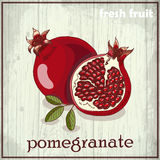 Hand drawing illustration of pomegranate. Fresh fruit sketch background Stock Photos