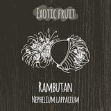 Hand drawing illustration of rambutan. Nephelium Stock Photos