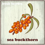 Hand drawing illustration of sea buckthorn. Fresh berries sketch background Royalty Free Stock Photo