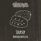 Hand drawing illustration of soursop. Annona Stock Photo