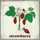 Hand drawing illustration of strawberry. Fresh berries sketch background Royalty Free Stock Image