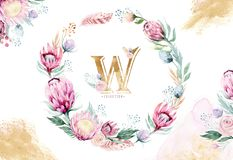 Hand drawing isolated watercolor floral illustration with protea rose, leaves, branches and flowers. Bohemian gold Stock Images