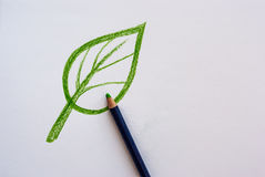 Hand drawing leaf with pencil Royalty Free Stock Photography