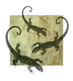 Hand drawing lizard dotwork Royalty Free Stock Images