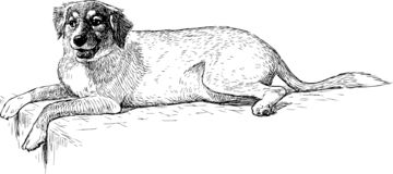 Hand drawing of a lying dog. Vector sketch of a cute lying dog royalty free illustration