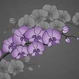 Hand Drawing Orchid Flower Royalty Free Stock Image