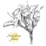 Hand drawing pears on pear tree branch royalty free illustration