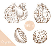 Hand drawing of physalis, vector illustration Royalty Free Stock Photo