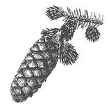 Hand drawing pine cone on fir branch with needles. Hand drawing pine cone on the tree. Christmas pinecone on fir branch with needles. Decoration for greeting Stock Image