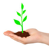 Hand and drawing plant Stock Image