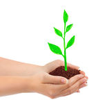 Hand and drawing plant Royalty Free Stock Photos