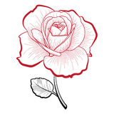 Hand drawing rose. Illustration of a hand drawing rose for print and design Stock Images