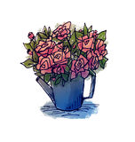Hand drawing roses in a watering can. Hand drawing bouquet from sketchbook Royalty Free Stock Images