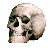 Hand drawing scull Royalty Free Stock Images