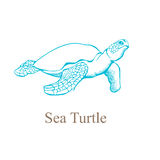 Hand drawing of a sea turtle. Vector illustration Stock Images