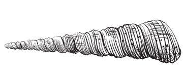 Free Hand Drawing Seashell-4 Royalty Free Stock Photography - 109426947