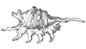 Free Hand Drawing Seashell-5 Royalty Free Stock Photos - 109427838
