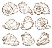 Hand drawing seashell set Royalty Free Stock Image