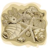 Hand drawing with shells and corals stock illustration