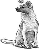 A hand drawing of a sitting dog stock illustration
