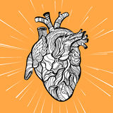 Hand drawing sketch anatomical heart. Doodle zentangle vector illustration Royalty Free Stock Photography