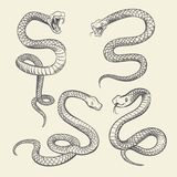 Hand drawing snake set. Wildlife snakes tattoo vector design isolated. Wild snake poisonous sketch, dangerous animal reptile illustration Royalty Free Stock Photo