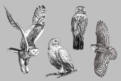 Hand drawing snow owl. Black and white freehand sketch drawing of snow owl Stock Illustration