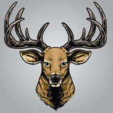 Hand drawing style of deer head royalty free illustration