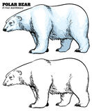 Hand drawing style of polar bear Stock Image