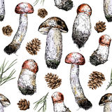 Hand drawing style seamless illustration of mushrooms, pine cones and fir-needles. Vector illustration Royalty Free Stock Images
