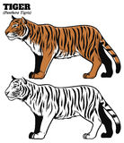 Hand drawing style of tiger Royalty Free Stock Photos
