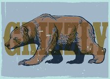 Hand drawing style of vintage grizzly bear poster Stock Photography