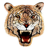 Hand Drawing of Tiger Head Portrait Royalty Free Stock Photography